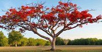 east point poinciana